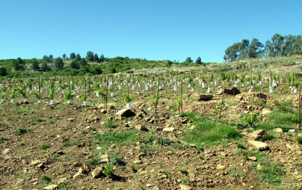 new plantings at Alto de la Ballena