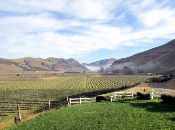 Morning fog dissipating at Bien Nacido Vineyard in Santa Maria Valley